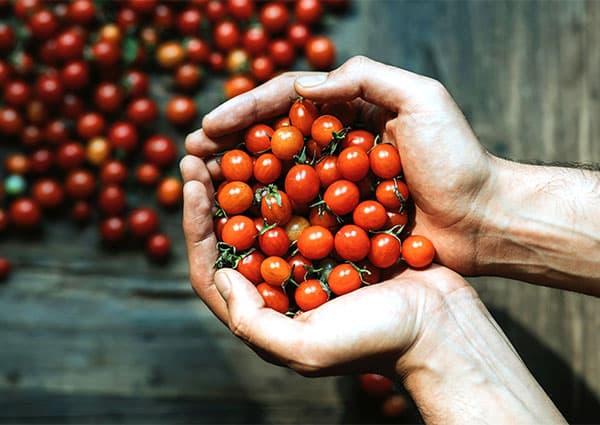 две шепи чери домати
